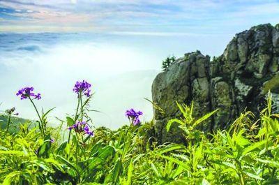地点:承德市兴隆县 雾灵山的春天来得相对较晚,5月初,杨柳嫩绿,桦树