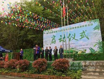 """奉节:""""龙桥首届万亩野生竹林采笋季""""文化旅游活动启动"""