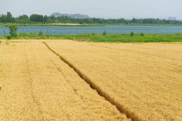 新政策:农民朋友注意了,国家又规定了2条新的宅基地红线!