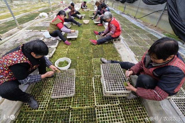 未来十年,农业将朝这5大方向发展,农民要心中有数?