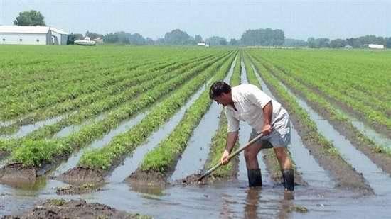 下个月起农民将迎来三大好事,脱贫致富不是梦,现在知道还不晚!