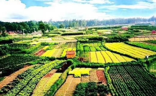 农业投资大势已来,未来20年农业用是最好的投资方向