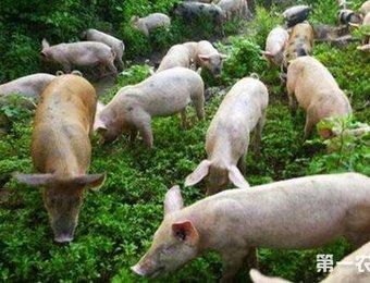未来10年养猪业将会经历什么巨变?