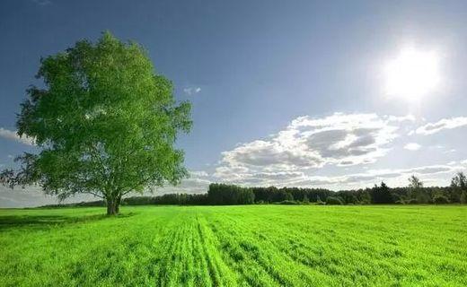 新规 | 2018年农村土地流转新政策出台,谁是真正受益人?