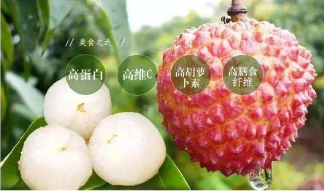 村網通廣東從化首屆荔枝展銷會圓滿舉行