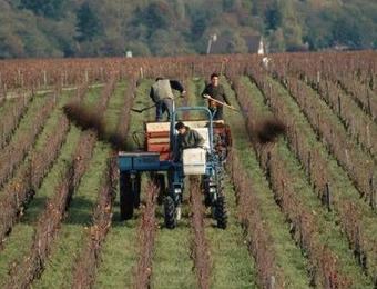为什么到田间指导施肥的专家从不说施用有机肥?