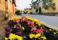 柳林镇新农村的美丽秋景