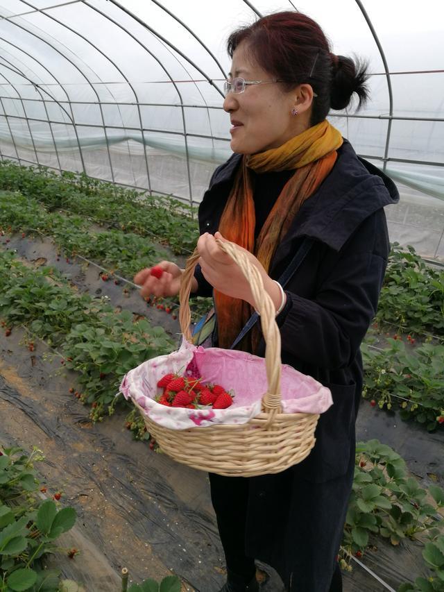 农家乐、亲子农庄运营及活动设计之一:还仅仅做采摘,你太OUT了