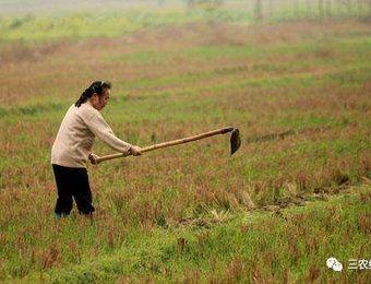 农村一亩地到底值多少钱?为什么很多人不愿种地?