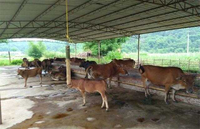 农村养殖什么更赚钱?这几样都可以,一定有你想要的