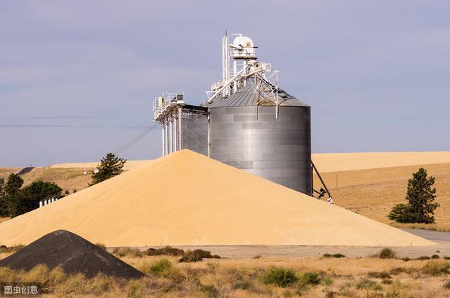 好消息:小麦终于要涨了!!!抓紧看一下!国企开始大量收购