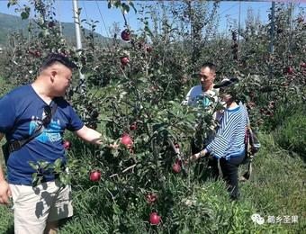 乐居镇:建现代化苹果示范园 促苹果产业发展助农增收