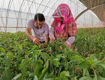 【爱国情·奋斗者】 科技特派员史进——蚯蚓技术助力农业增效、农民增收