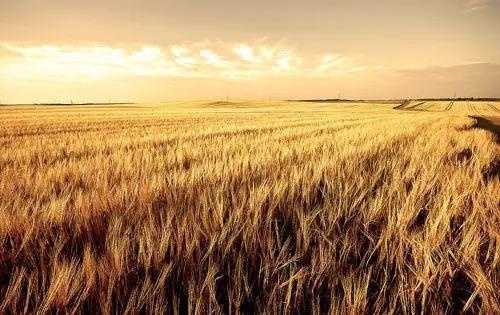 如何让农业补贴进到你的口袋?