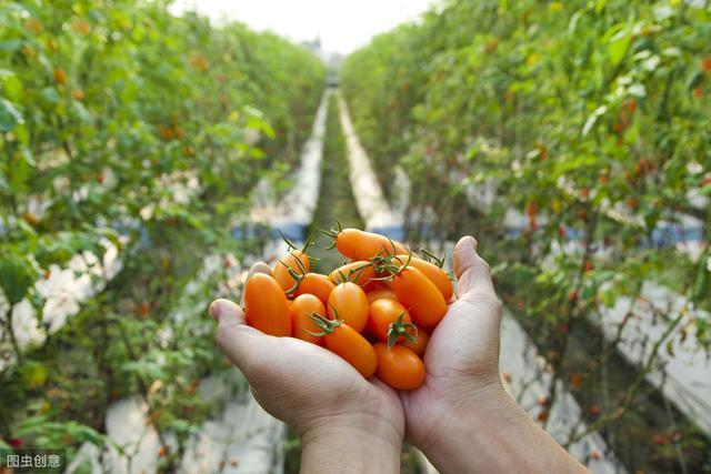 中国农业正经历5大商业变革