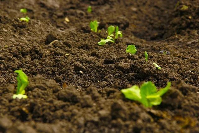 土地不翻耕,一亩增产120斤!省时又省钱