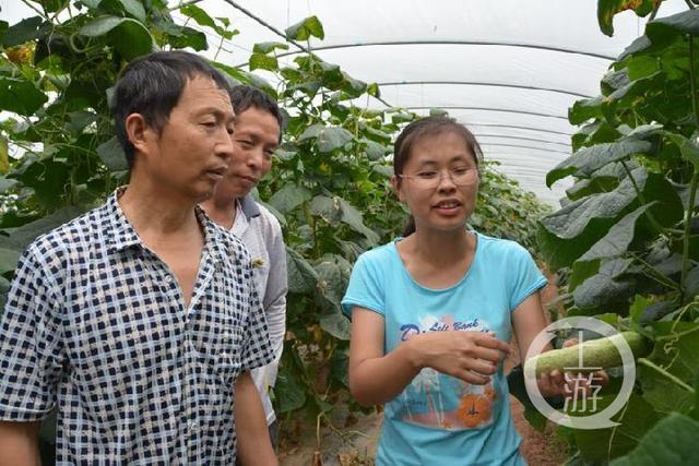 大学生村官拿出嫁妆钱建蔬菜大棚 帮助村民增收500余万元