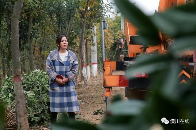 年入五十万,她是潢川80后全职妈妈,也是卜集第一代苗木经纪人
