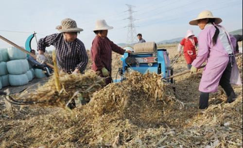 农村致富的三个新思路,目前很多地方都在推广,值得借鉴