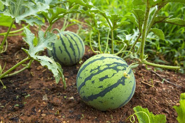 农业合作社种植新模式,农村100亩地年赚50万