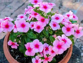 3月开始,8种花随便养,开花多长得快,新手也能养爆盆!