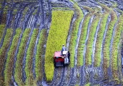 人家种地能赚大钱,我国的农业为什么不赚钱?问题出在哪里呢?