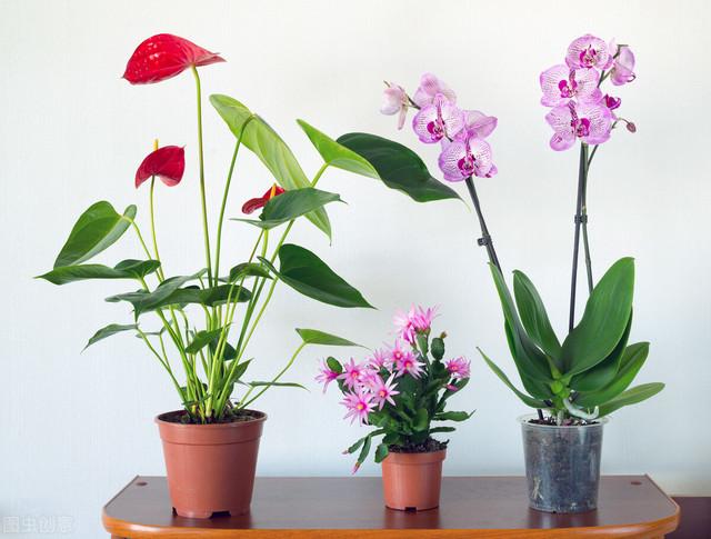 """客厅养花草,有6个""""穷讲究"""",是老一辈传下来的经验"""