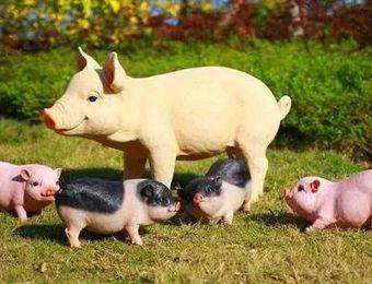 政策和市场利好!养猪创业应该按照这3个思路干,避开大佬竞争