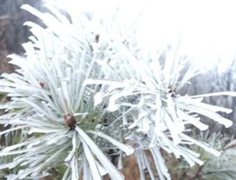 """跌破0°C!清远""""下雪了"""",未来几日天气……"""