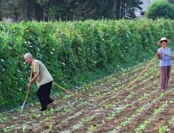 如果耕地国有化,农民给国家种地,每月拿工资,可不可行~