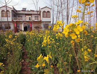 邵胡同村农家小院门前的油菜花开了,芳香的气息扑面而来!