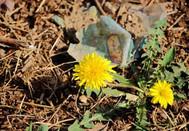 花儿开在春天里