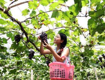 农民想要脱贫致富,不了解这些知识只能走弯路