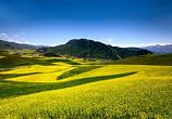 农业部:要大力培育土地经营权流转市场
