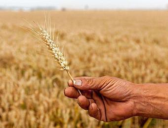 中国农业的痛点不是技术和设备,而是农产品没有渠道!