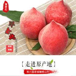 南水北調中線渠首早熟王桃子5斤正式開售好吃看得見