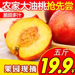 桃子山東沂蒙山當季新鮮水果水蜜桃5斤孕婦現摘油桃黃桃毛桃脆甜