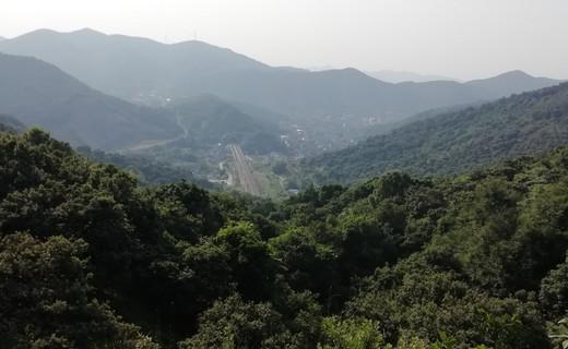 家乡特产——杨梅