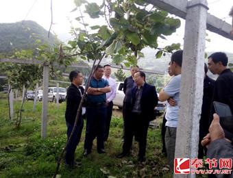 """县科技局:邀请重庆文理学院博士团为猕猴桃""""把脉"""""""