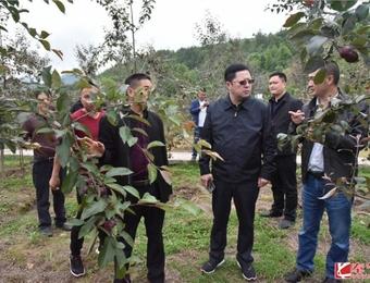 竹园镇:500亩红肉苹果敲开百余农户致富门