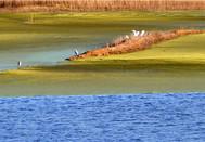 山東陽谷:金堤河 美如畫 構織著濃濃的祥和與靜謐