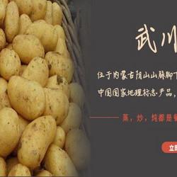 内蒙古高原武川土豆
