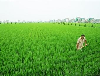 水稻涝灾发生后应怎么管理
