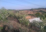 绿色~兰色构成了美丽的田园风光!