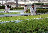 屈冬玉:全国2.6亿小农户如何衔接现代农业?