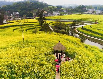 让乡村社会既充满活力又和谐有序——中国乡村治理呈现新局面