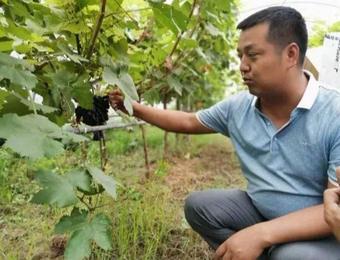 杨凌:人才+科技 聚起乡村振兴新动能