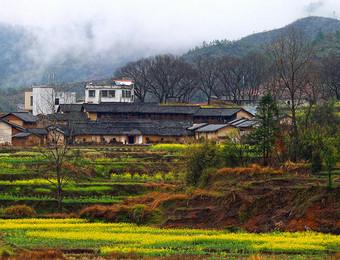 乡村衰败,一个重要的原因是乡村缺乏产业支撑