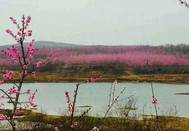 桃花朵朵开2