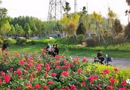 """商河,藏在济南市内的""""花园城市"""""""